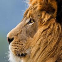 Safari Bookers LetsgoafricaSafaris