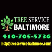 Clipper City Tree Service