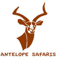 Antelope  Safaris
