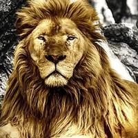 Lion Canvas Art