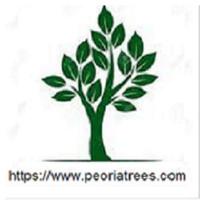 Peoria Trees