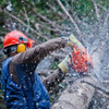 WA Tree Lopping Service
