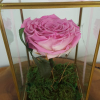 Roseforall Q8